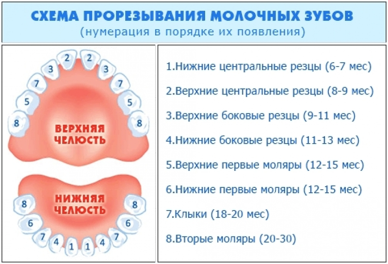 Порядок прорезывания зубов у детей (молочных и коренных)